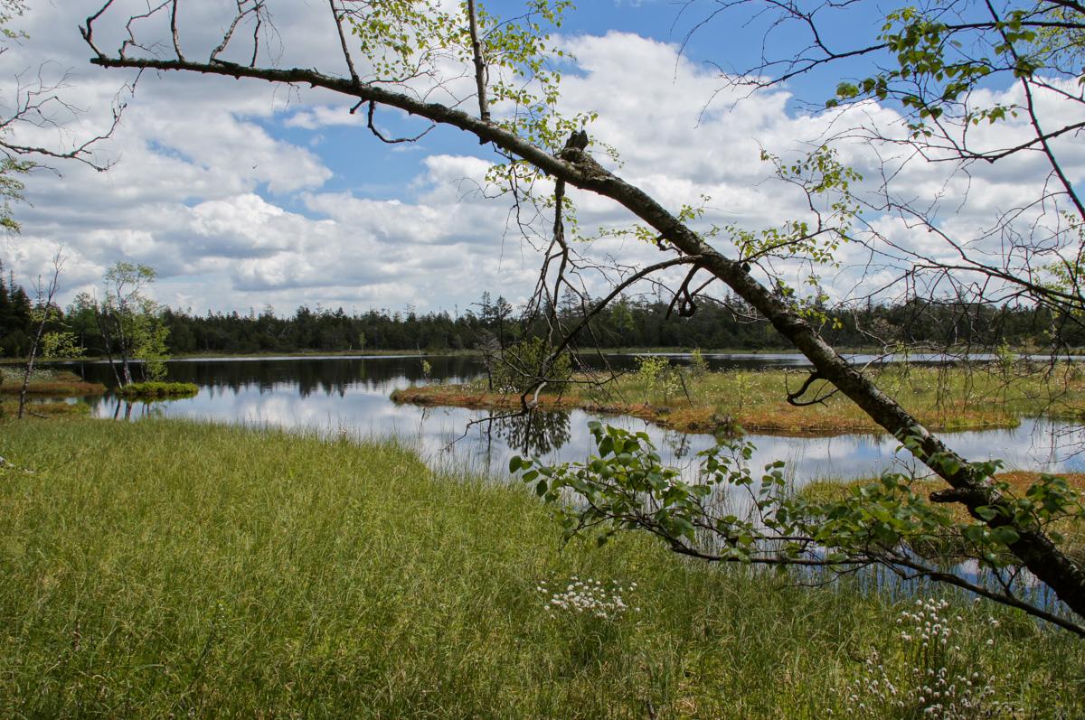 Wildsee bei Kaltenbronn (Bild: Der Weg)