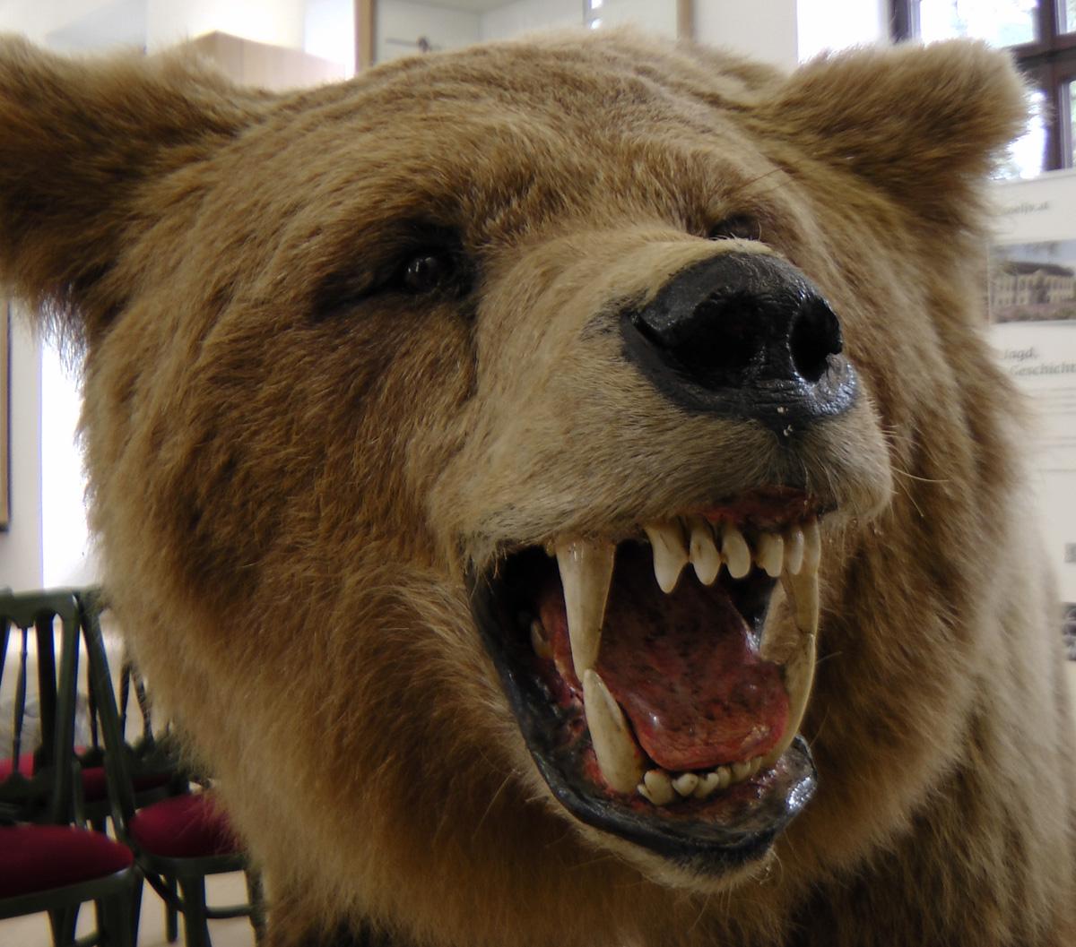 Bär (Bild: Der Weg)